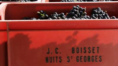The Harvest from Nuits St. Georges